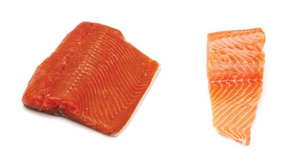 Salmon_Liar_dan_salmon_Ternak_600